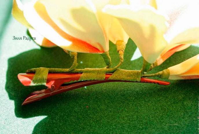Thomas canna flowers