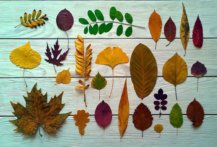 Поделки из листьев и из гербария 296
